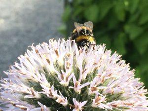 sommarträff för trädgårdsälskare