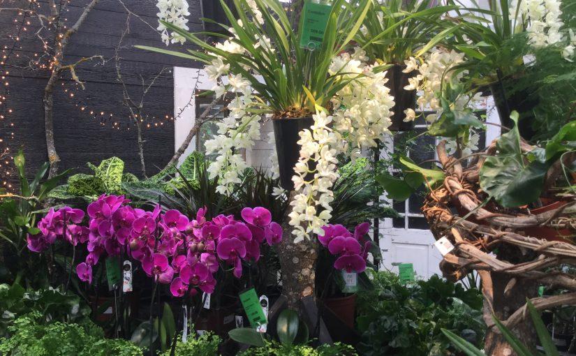 En full liten buss tog oss till orkidéutställning