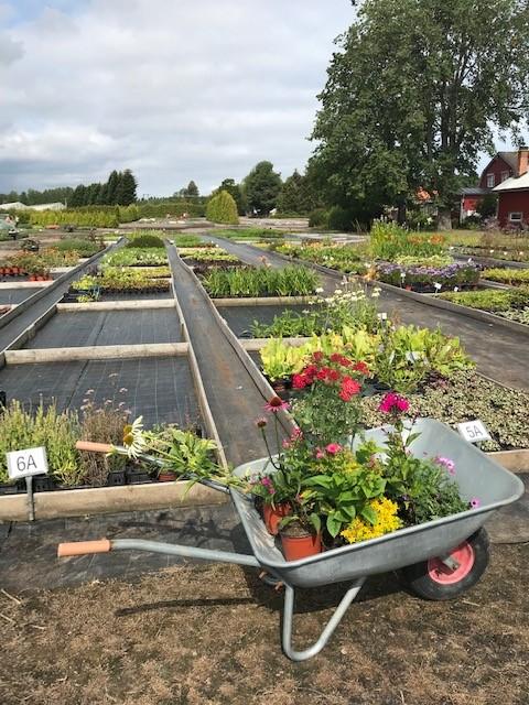Rolands plantskola (2)