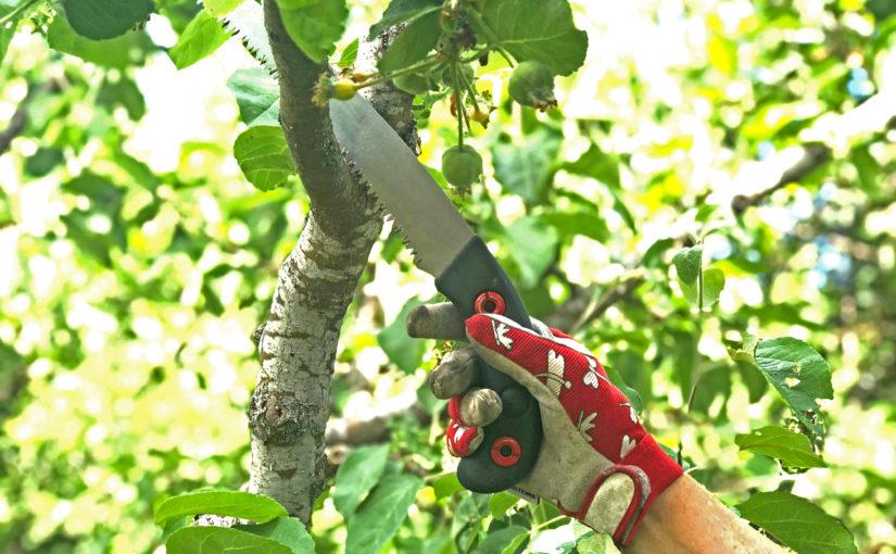 Konsten att beskära fruktträd