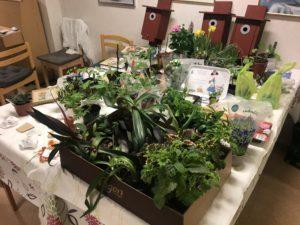 Växtlotteri