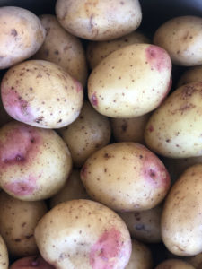 potatisprovning