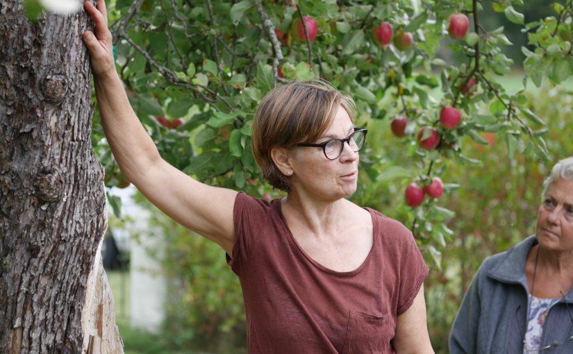 Besök i biodlarens trädgård