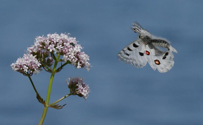 Fjärilarna i trädgården