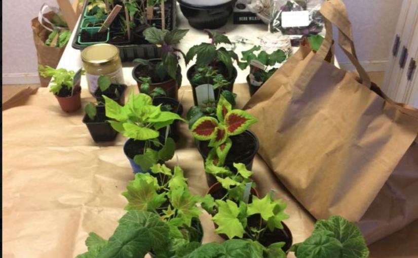 Årsmöte, fika och växtlotteri