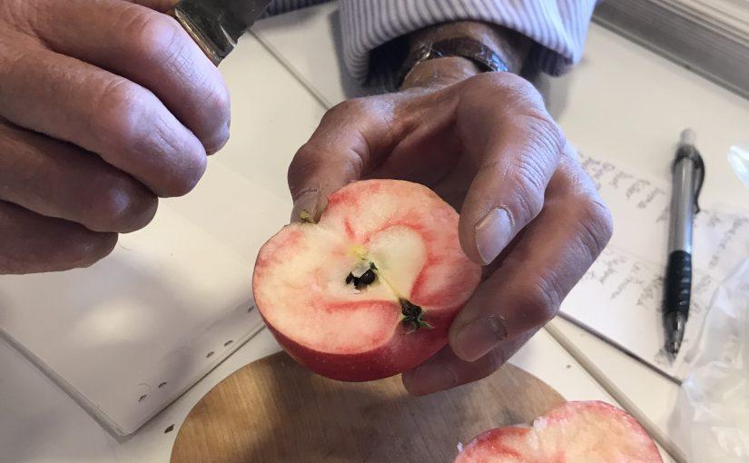 äpplets dag 2019